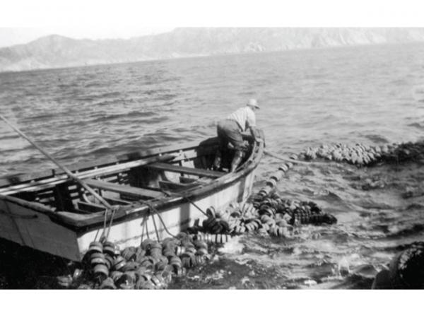 Purse seiners everett waterfront historical interpretive for Purse seine fishing